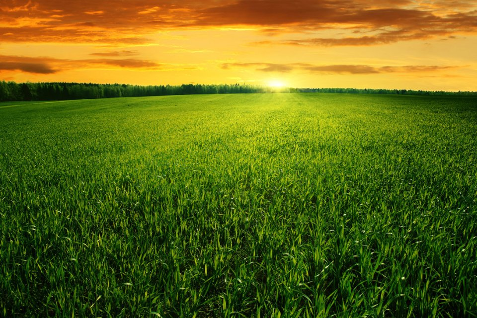 grass-field-sunset-wallpaper-4